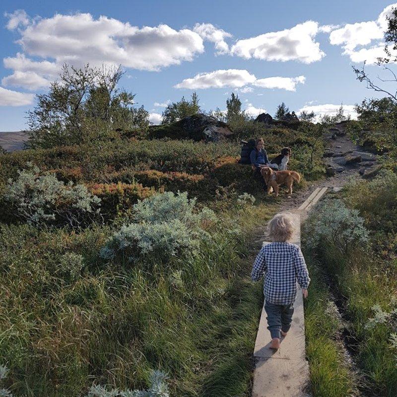 Fjällvandring Jämtlandstriangeln