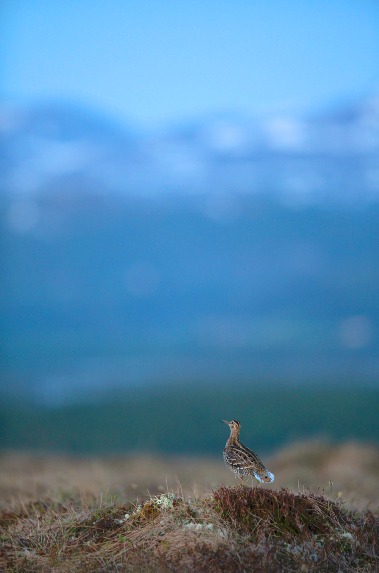 Fågelskådning